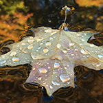 floating leaf with water drops